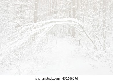 Snowy winter forest in  morning misty haze