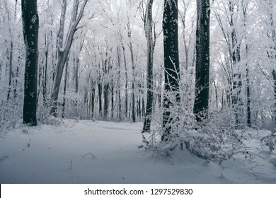 snowy winter landscape with frozen trees in magical forest