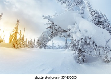 Snowy winter landscape with snowbound fir trees and sunset light. Sheregesh resort, Siberia, Russia