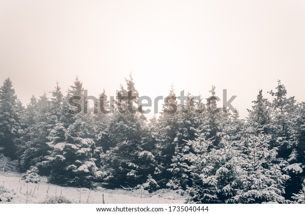 Snowy winter landscape with sunrise in the Harz National Park