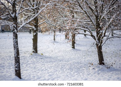 Snowy winter in the park