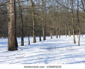 Snowy Winter in Park. Zdrowie Park in Lodz, Poland. - Shutterstock ID 1358493233