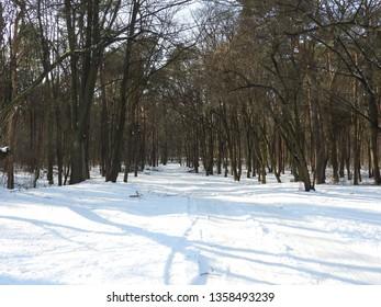 Snowy Winter in Park. Zdrowie Park in Lodz, Poland. - Shutterstock ID 1358493239