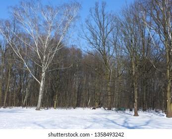 Snowy Winter in Park. Zdrowie Park in Lodz, Poland. - Shutterstock ID 1358493242