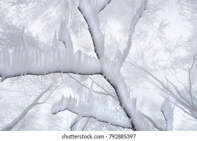 snowy winter in a peaceful forest