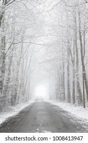Snowy winter road with trees