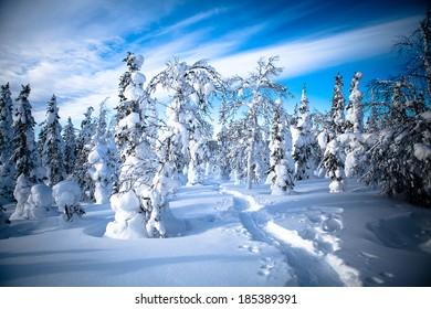 Snowy Winter Scandinavian Landscape, Finland
