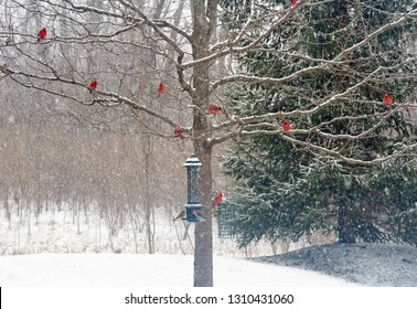 Snowy Winter Tree with Male Cardinals