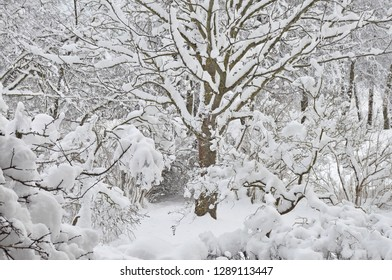 Snowy winter trees, fresh new snow covered garden, lilac branches after blizzard snowstorm, heavy snowfall drifts, multiple tree twigs detail, large detailed horizontal closeup