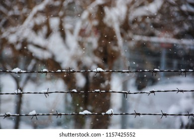 snowy wire  and trees