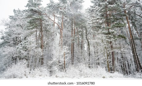 Snowy woodland in Poland