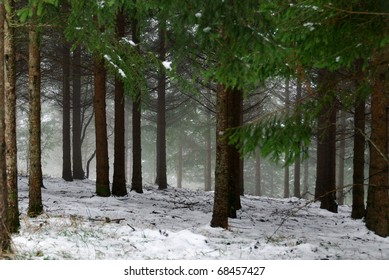Snowy woods and underbrush on the Apennines between Tuscany and Emilia