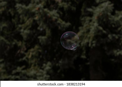 Soap bubble floating in the air with tree in the background