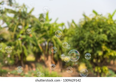 Soap bubbles in the air with natural background, Outdoor activity funny and party