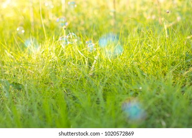 Soap bubbles floating over the lawn(grass) with beautiful sunlight.