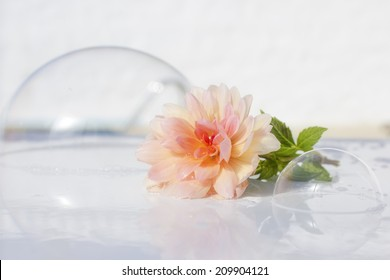 soap bubbles and flower, clean freshness and aroma atmosphere
