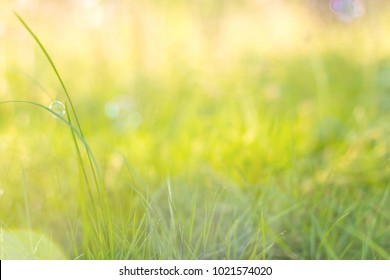 Soap bubbles over green grass with warm light.