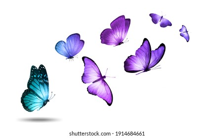 Soaring colored butterflies isolated on a white background. High quality photo