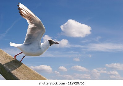 Soaring seagull against the blue sky