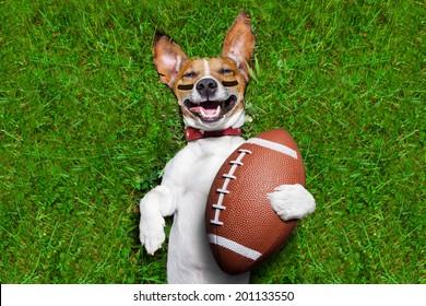 chien de football tenant une balle de rugby et riant à voix haute