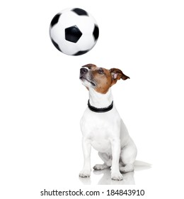 soccer dog with spinning ball over the nose