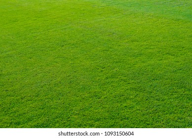 Soccer field  or football field background.