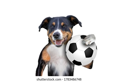 soccer football dog with ball ,white Background