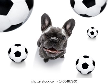 soccer football french bulldog dog playing with leather ball  , isolated on white background and german  flag