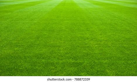 soccer green grass playing field