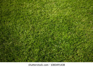 Soccer meadow background