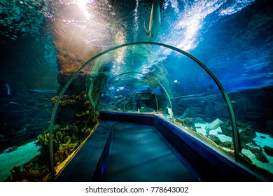SOCHI, RUSSIA - DECEMBER 13, 2017: Sochi Discovery World Aquarium,  the largest aquarium in Russia