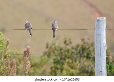 Social distancing - birds on the fence