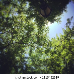 Social media like photo of trees in the sun on summer day in Central Park Manhattan