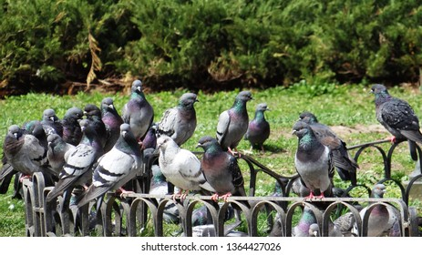 SOFIA, BULGARIA - APRIL 06, 2019: Close-up view of birds in Banki Square, Sofia, Bulgaria - Image