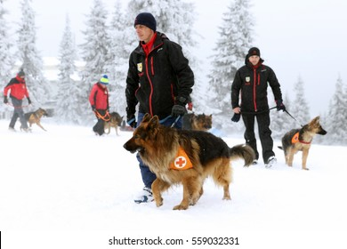 Sofia, Bulgaria - January 18, 2016: Rescuer from the Mountain Rescue Service at Bulgarian Red Cross and his dog are participating in a training for saving people in an avalanche.