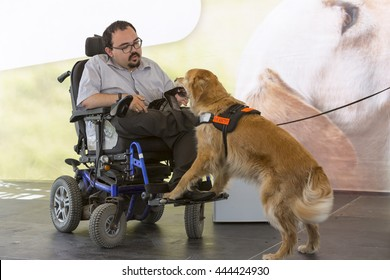 Sofia, Bulgaria - June 21, 2016: An assistance dog is shown during a performance before given to an individual with a disability. The animal is trained by an assistance dog organization.