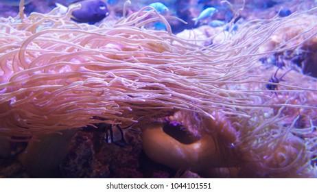 a soft anemone garden