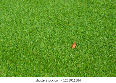 Soft artificial grass cover. Artificial turf on backyard with natural leaf