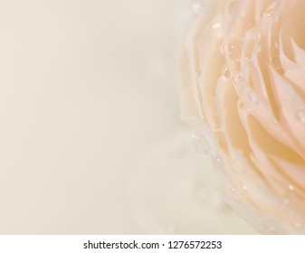 Soft background of sweet beige rose petals with water drops and bokeh in pastel tone for valentine's or wedding card, macro