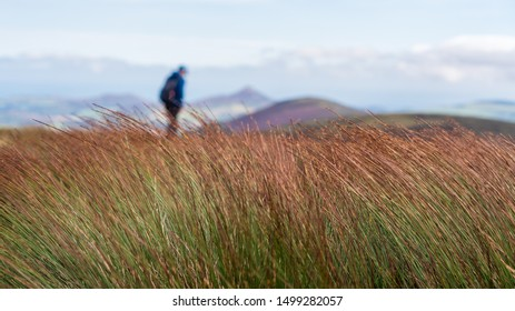 Soft background with tall grass swaying in the wind and with a blurred hiker silhouette walking in the distance. Loneliness, being alone and fighting depression concept.