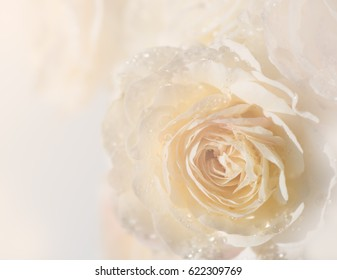Soft background of water drops and bokeh on beige English rose petals in pastel tone, macro