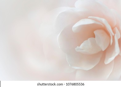 Flower petals soft images stock photos vectors shutterstock soft background with white flower pastel color blurred backdrop mightylinksfo