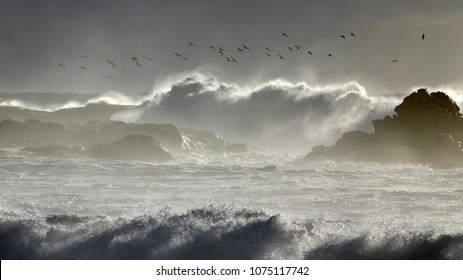 Soft backlit seascape with seagulls flying over winter big breaking waves.