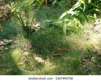 Soft Bed of Grass on the Forest Floor with Ferns