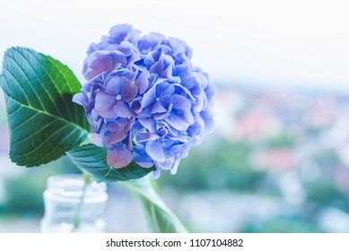 Soft blue hydrangea (hortensia) in a vintage glass jar. Close up.