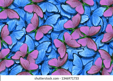 Soft blue and pink natural textural background. Wings of a butterfly Morpho. Flight of bright butterflies abstract background.