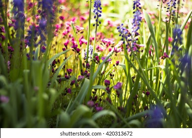 Soft and blur conception.Beautiful pink and blue flowers small size blooming in the garden close up on the background of green grass and leaves with sun light in the middle