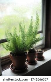 Soft blur pot plant with bokeh background