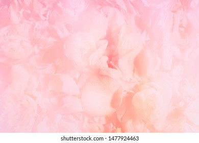 Soft blurred abstract pink petals background