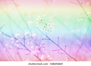 Soft Blurred of beautiful colorful pink Cherry blossom flower.
